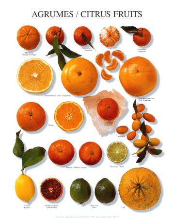 arm131citrus-fruit-posters